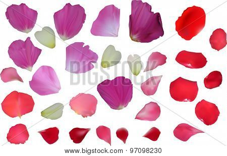 illustration with flower petals isolated on white background