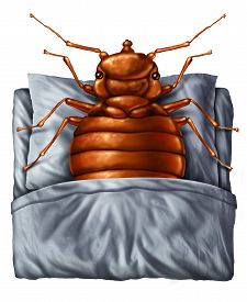 picture of parasite  - Bedbug or bed bug concept as a parasitic insect pest resting on a pillow the sheets as a symbol and metaphor for the danger of a bloodsucking parasite living inside your mattress - JPG