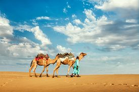 picture of camel  - India Rajasthan travel background  - JPG