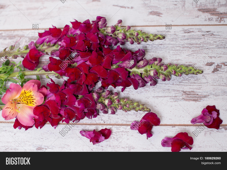 Snapdragon Flowers Bouquet Arranged Image Photo Bigstock