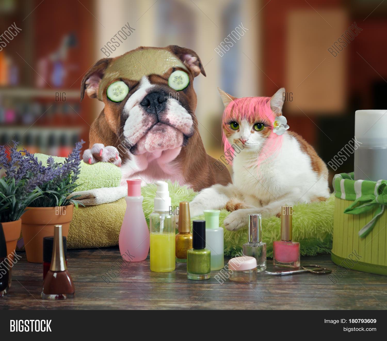Funny Cat Dog Beauty Salon Spa Image &