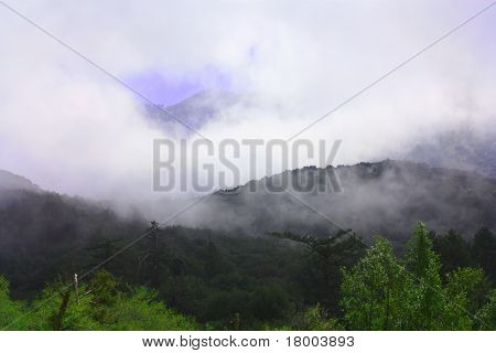 Forest Clouds