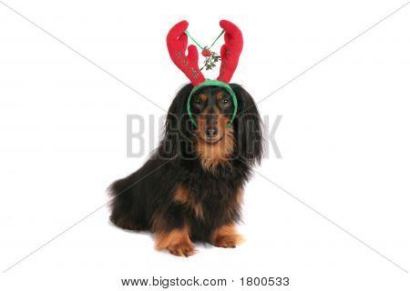 Kiss Me Christmas Dog