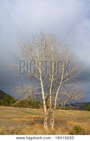 Sturm-Baum
