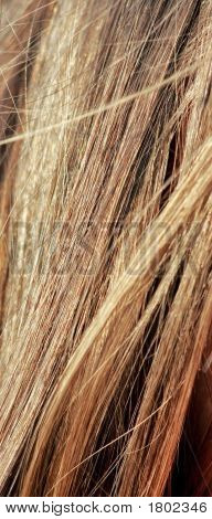Hair Abstract