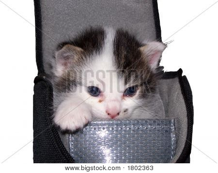 Kitten In Camera Bag