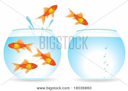 Migration Of Fishes