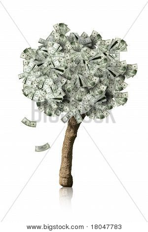 Amazing Money Tree Isolated With Falling Leaves