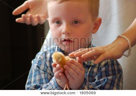 Chicken 101 6