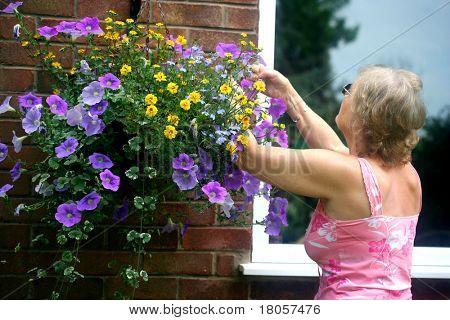 Eine ältere Dame, die tendenziell ihre hängenden Korb im Garten im Sommer.