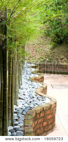 Line of beautiful dwarf bamboo surrounded by pebbles in a landscape garden