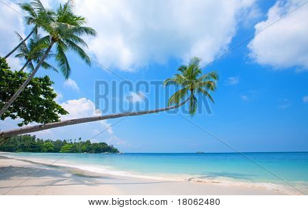 Beautiful beach with crystal clear blue waters and palm trees