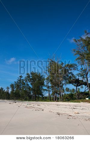 Tall casuarina trees line the coastal sandy beach of a tropical island