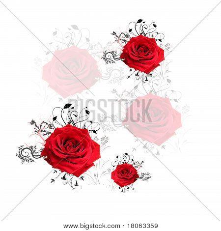 roses sqaure