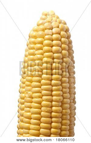 Closeup of isolated fresh sweet corn