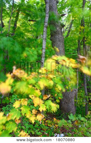 Windy Forest Background