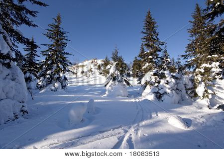 Tranquil winter landscape. Snow, trees and blue sky. Ski tracks on snow.Russia. South Ural mountains