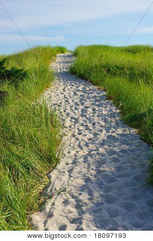Sandy path cut through grass that leads to beach
