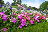 stock photo of manicured lawn  - Pretty manicured flower garden with colorful azaleas - JPG