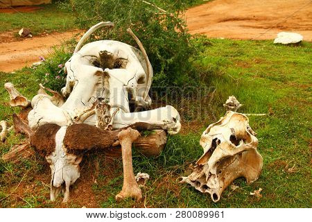 A Group Of Safari Animal