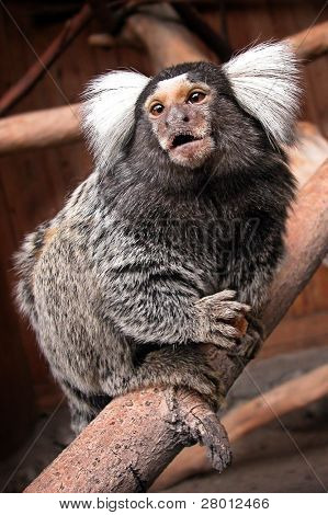 Portrait of monkey in the Novosibirsk Zoo