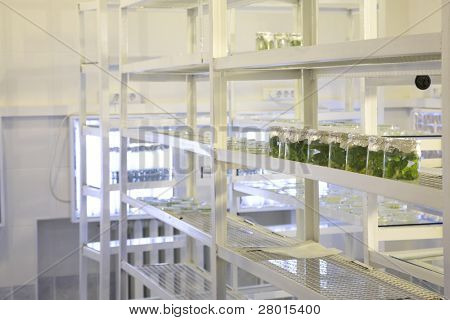 laboratory workplace for creating modern transgenic plants