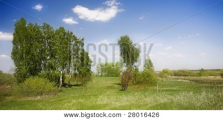 Birches standing against background of bright sky