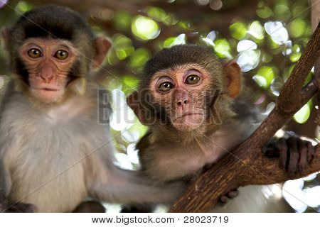 couple monkey sitting on big tree branch