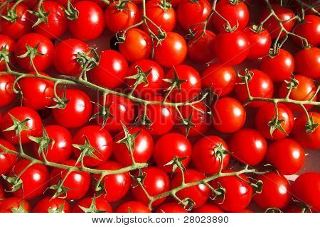 multitude of cherry tomatoes at the vine