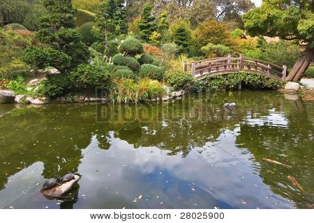 Decorative fishes in a pond of the Japanese park in the city of Saratoga, the USA