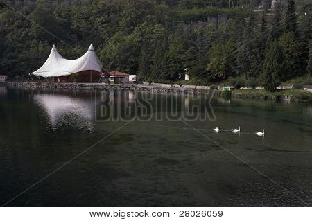Tent on coast of silent wood lake and floating ducks