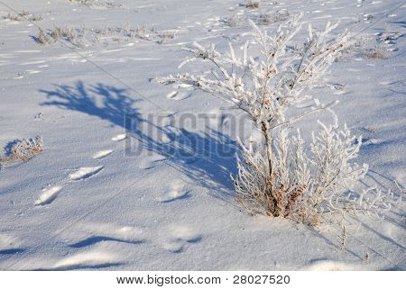 Shrub In The Field Covered With Snow