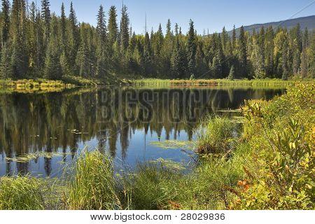 El lago de montaña silenciosa rodeado por piel-árboles y arbustos en el otoño.