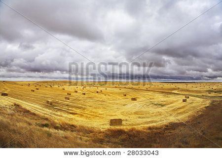 Enorme campo en el estado de Montana después de la cosecha.