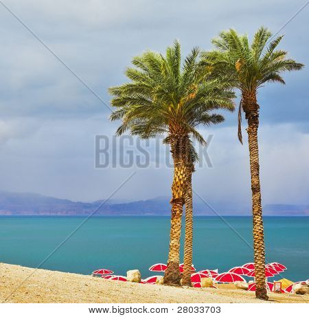Three picturesque palm trees and bright red beach canopies on a beach of the Dead Sea in a thunder-storm