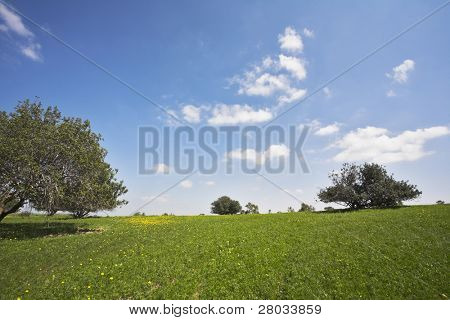 Midday on blossoming hills of hot coast of Mediterranean sea - a grass, camomiles and trees