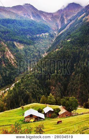 tiefe Schlucht, kleine Landhäuser auf der Alm und der Weidegras Kuh