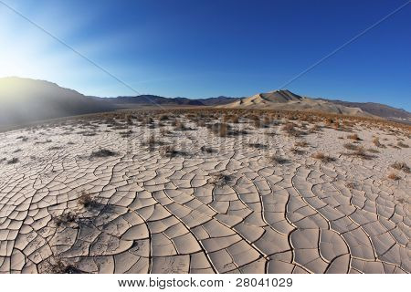 Sunrise in Death Valley. Dry brush on white cracked soil. Rhotograph Fisheye lens
