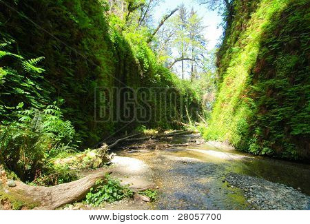 stream flowing through fern canyon