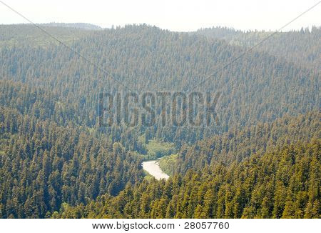 rolling hills of redwood forest