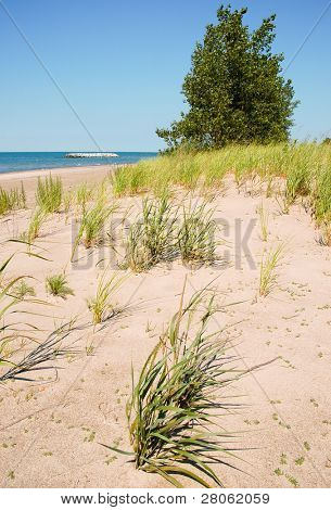 sandy beach and coastal plants
