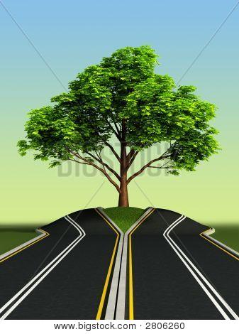 Árbol en medio de carretera