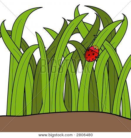 Lady Bug im Gras