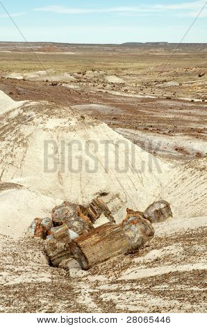 painted desert landscape and petrified wood