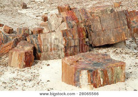 colorful petrified wood