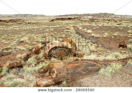 petrified wood, desert logs and grassy landscape