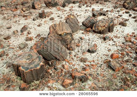 piles of petrified wood
