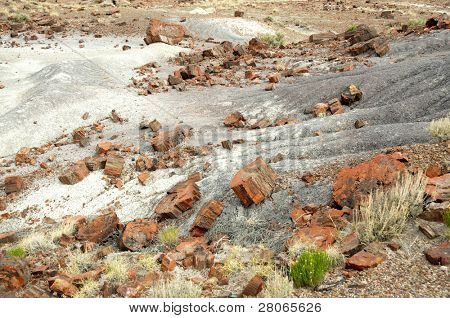 petrified wood on painted desert