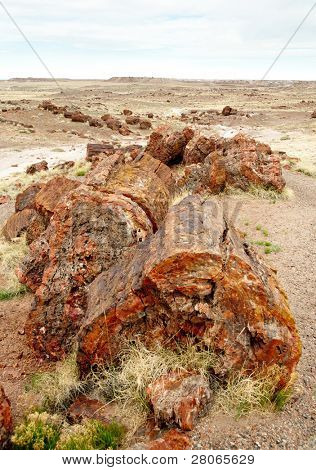 petrified logs and grassy landscape