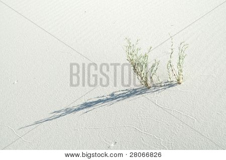 plant growing through sand dunes